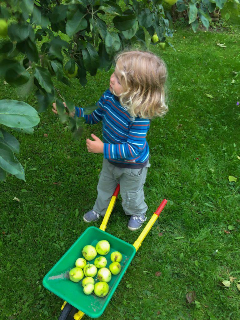 Omenoiden-keruu