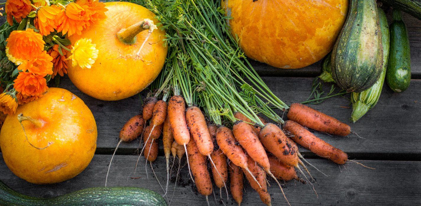 Lisää kasvisruokaa koko perheelle