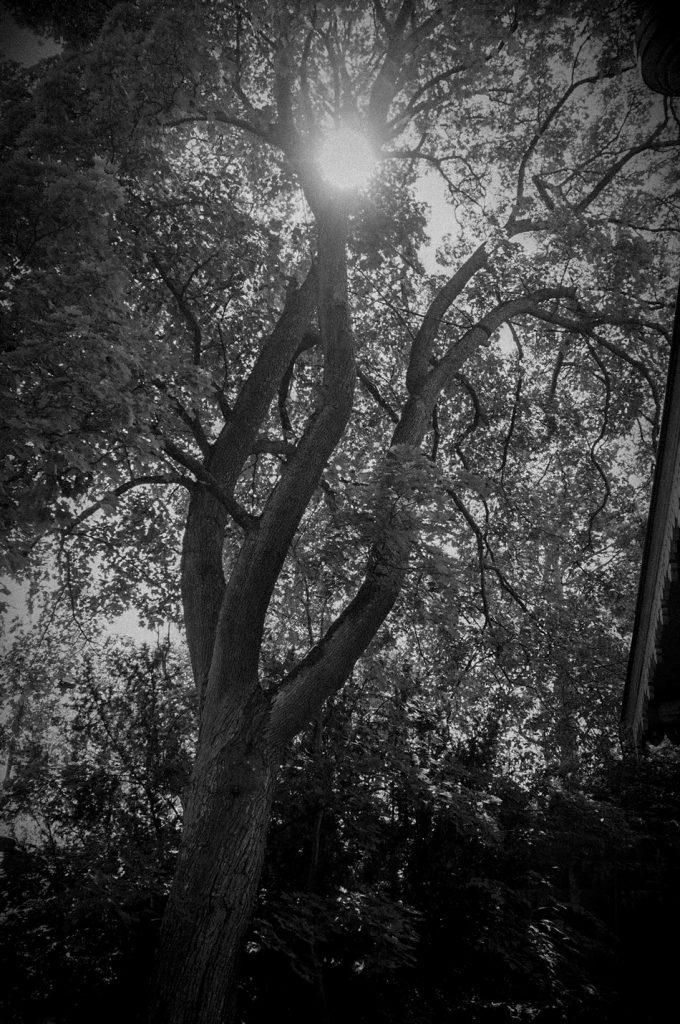Aurinko-pilkistää-puisen-lomasta