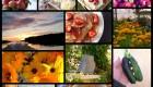 Peruna-kukkakaalikeitto